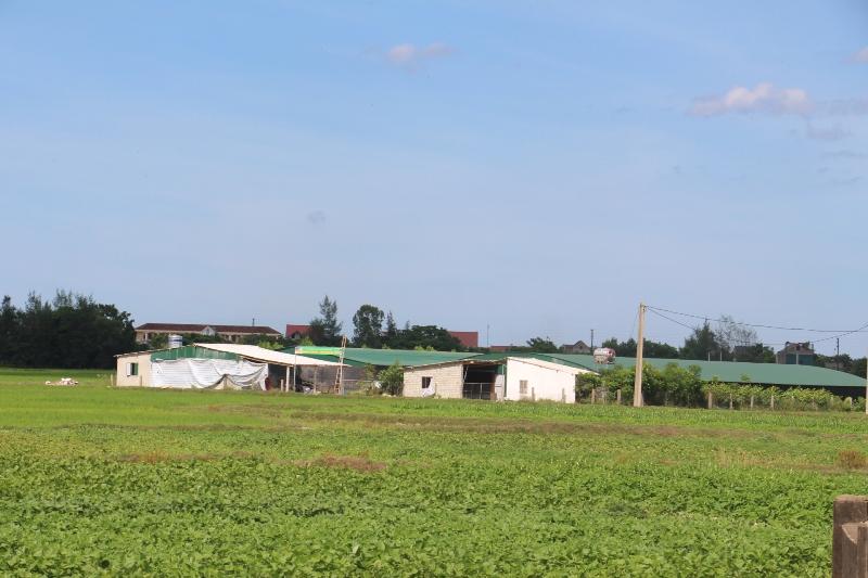 Trang trại gà với quy mô 12 nghìn con nằm sát khu dân cư thôn Tân Lộc