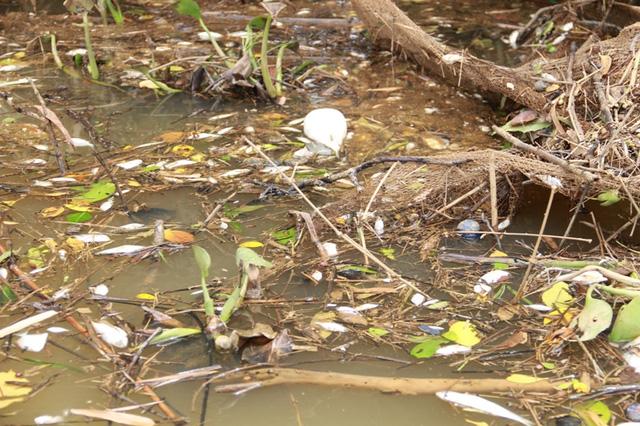 Cá chết hàng loạt trên sông Sa Lung, đoạn chảy qua xã Vĩnh Long, huyện Vĩnh Linh
